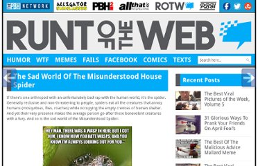 http://runt-of-the-web.com/the-sad-world-of-the-misunderstood-house-spider