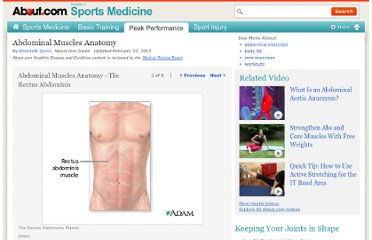 http://sportsmedicine.about.com/od/abdominalcorestrength1/ss/AbAnatomy_2.htm