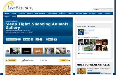 http://www.livescience.com/16392-sleeping-animals-image-gallery.html