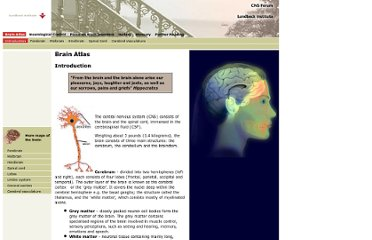 http://www.brainexplorer.org/brain_atlas/Brainatlas_index.shtml