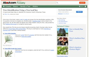 http://forestry.about.com/od/treeidentification/tp/tree_key_id_start.htm