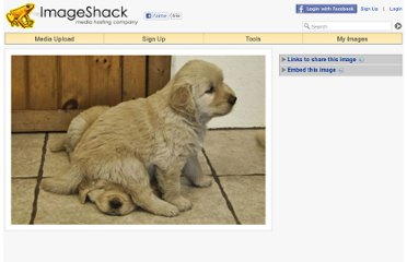 http://imageshack.us/photo/my-images/811/mcpuppies5.jpg/