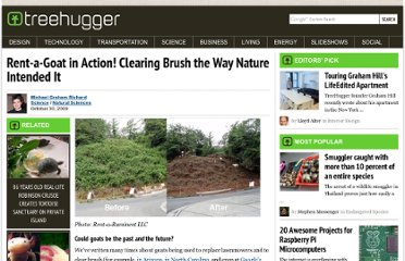 http://www.treehugger.com/natural-sciences/rent-a-goat-in-action-clearing-brush-the-way-nature-intended-it.html
