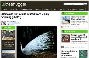http://www.treehugger.com/natural-sciences/albino-and-half-albino-peacocks-are-simply-stunning-photos.html