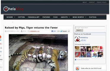 http://helablog.com/2011/11/raised-by-pigs-tiger-returns-the-favor/