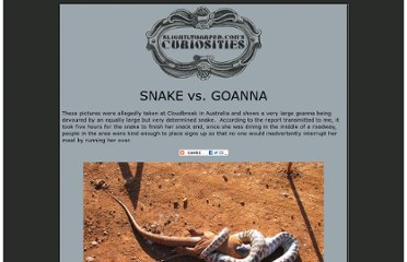 http://www.slightlywarped.com/crapfactory/curiosities/2009/snake_vs_goanna.htm