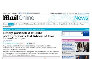http://www.dailymail.co.uk/news/article-1132023/Simply-purrfect-A-wildlife-photographers-labour-love.html