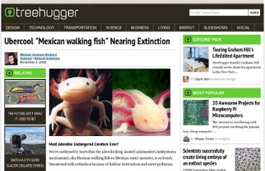 http://www.treehugger.com/natural-sciences/ubercool-mexican-walking-fish-nearing-extinction.html