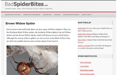 http://www.badspiderbites.com/brown-widow-spider/