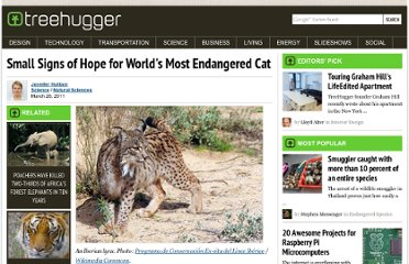 http://www.treehugger.com/natural-sciences/small-signs-of-hope-for-worlds-most-endangered-cat.html