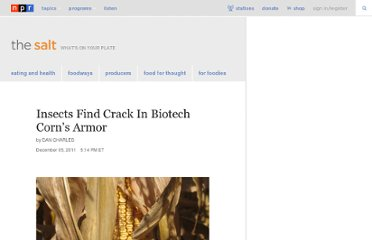 http://www.npr.org/blogs/thesalt/2011/12/05/143141300/insects-find-crack-in-biotech-corns-armor