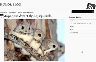 http://www.humor-blog.com/japanese-dwarf-flying-squirrels/