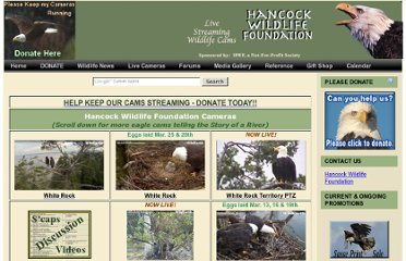 http://www.hancockwildlife.org/index.php?topic=cam-sites