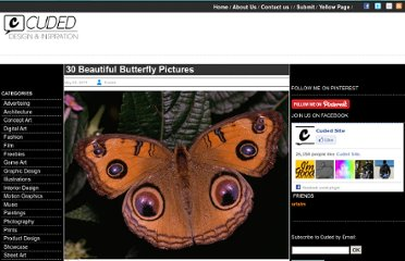 http://www.cuded.com/2011/05/photographs-from-nature-30-beautiful-butterfly-pictures/