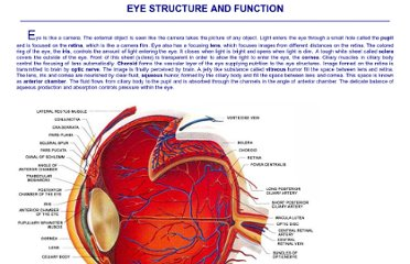 http://www.myeyeworld.com/files/eye_structure.htm