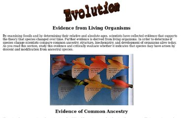http://bioweb.cs.earlham.edu/9-12/evolution/HTML/live.html