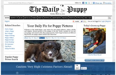 http://www.dailypuppy.com/puppies/?date=2012-01-10