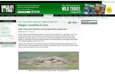 http://www.wildlifeextra.com/go/world/crocodiles-iran.html#cr
