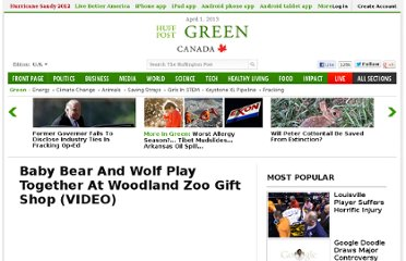 http://www.huffingtonpost.com/2012/02/09/baby-bear-and-wolf-play-together-woodland-zoo_n_1266062.html