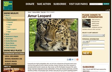 http://www.wcs.org/saving-wildlife/big-cats/amur-leopard.aspx