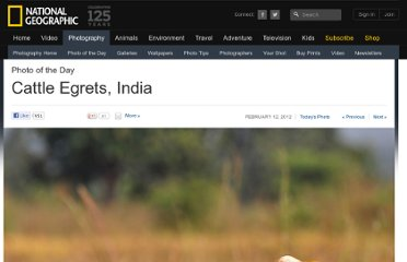 http://photography.nationalgeographic.com/photography/photo-of-the-day/cattle-egrets-india/