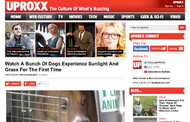 http://www.uproxx.com/webculture/2011/11/watch-a-bunch-of-dogs-experience-sunlight-and-grass-for-the-first-time/
