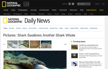 http://news.nationalgeographic.com/news/2012/02/pictures/120213-sharks-swallows-whole-great-barrier-reef-animals-science/