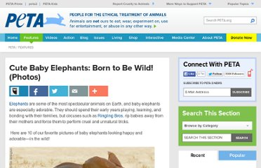 http://www.peta.org/features/Cute-Baby-Elephants-Born-to-Be-Wild-Photos.aspx
