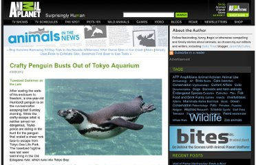 http://blogs.discovery.com/animal_news/2012/03/penguin-busts-out-of-tokyo-aquarium-enjoys-victory-lap.html#mkcpgn=fbapl1