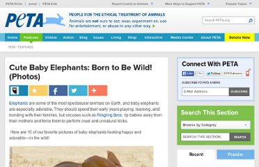 http://www.peta.org/features/Cute-Baby-Elephants-Born-to-Be-Wild-Photos.aspx/