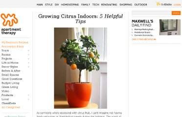 http://www.apartmenttherapy.com/growing-citrus-indoors-129910