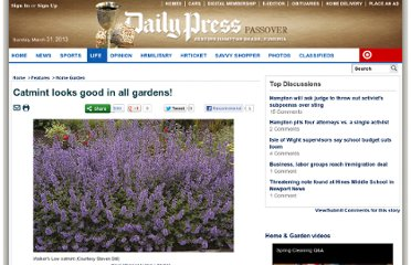http://www.dailypress.com/features/family/home-garden/dp-garden-catmint,0,289046.story