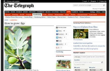 http://www.telegraph.co.uk/gardening/3343769/How-to-grow-figs.html