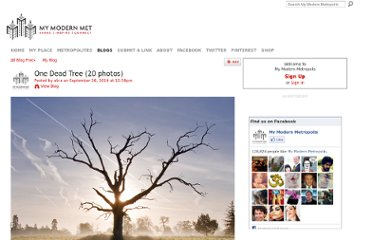 http://www.mymodernmet.com/profiles/blogs/one-dead-tree-20-photos/