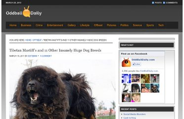 http://www.oddballdaily.com/2011/03/18/tibetan-mastiffs-and-11-huge-dog-breeds/