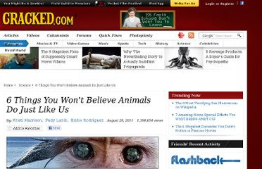 http://www.cracked.com/article_19388_6-things-you-wont-believe-animals-do-just-like-us_p2.html