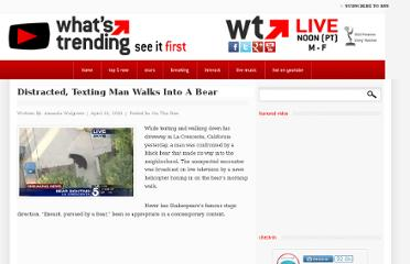 http://whatstrending.com/2012/04/distracted-texting-man-walks-bear/