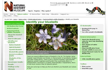 http://www.nhm.ac.uk/nature-online/british-natural-history/survey-bluebells/bluebell-identification/index.html
