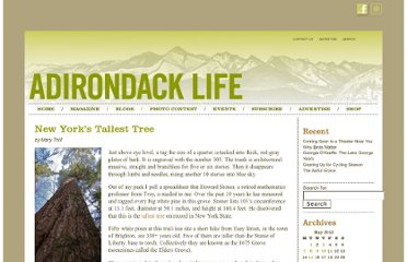 http://www.adirondacklifemag.com/blogs/2012/05/01/new-yorks-tallest-tree/