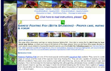 http://www.aqua-fish.net/show.php?h=siamesefighting