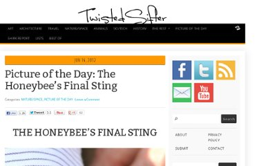 http://twistedsifter.com/2012/06/picture-of-the-day-the-honeybees-final-sting/