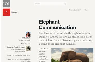 http://suite101.com/article/elephant-communication-a114288
