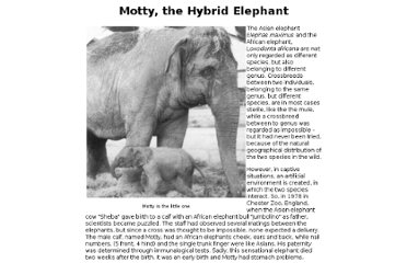 http://www.hybridelephant.com/motty.html