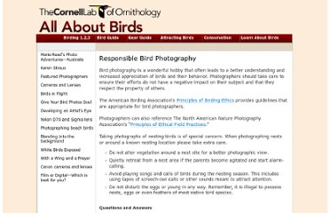 http://www.birds.cornell.edu/AllAboutBirds/bp/guidelines