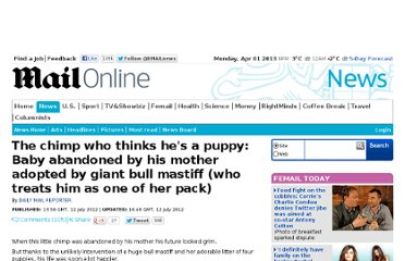 http://www.dailymail.co.uk/news/article-2172570/Chimp-adopted-bull-mastiff.html