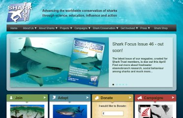 http://www.sharktrust.org/content.asp?did=34462