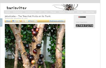 http://www.kuriositas.com/2010/04/jabuticaba-tree-that-fruits-on-its.html