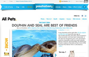 http://www.pawnation.com/2012/07/11/dolphin-and-seal-are-the-best-of-friends/#