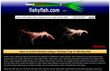 http://www.fishyfish.com/coon_stripe_shrimp/how-to-catch-shrimp.html