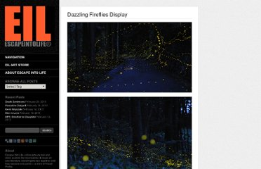http://www.escapeintolife.com/photography/dazzling-fireflies-display/